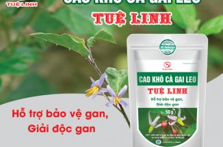 Cao khô cà gai leo Tuệ Linh